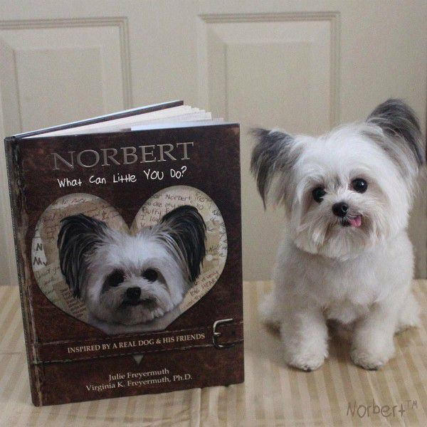 Norbert's second book was published in 2014. (Image courtesy Norbert's Facebook page)