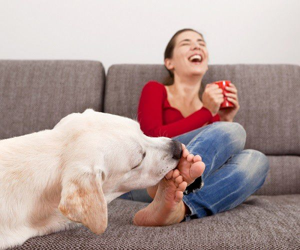 Woman drinking coffee on the sofa with her dog licking her toes. By Shutterstock