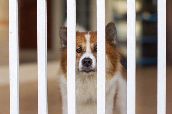 dogs behind metal fence by Shutterstock