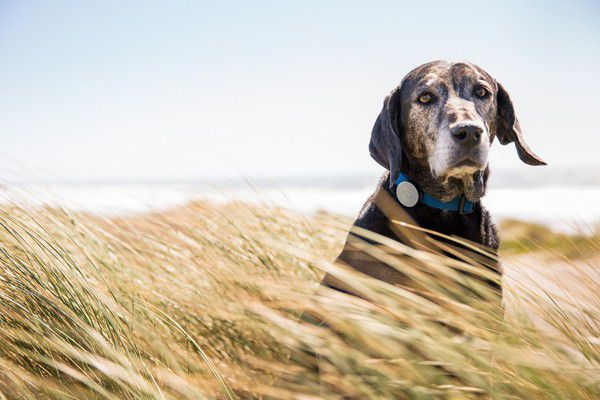 Always know where your dog is with the Whistle GPS dog tracker.