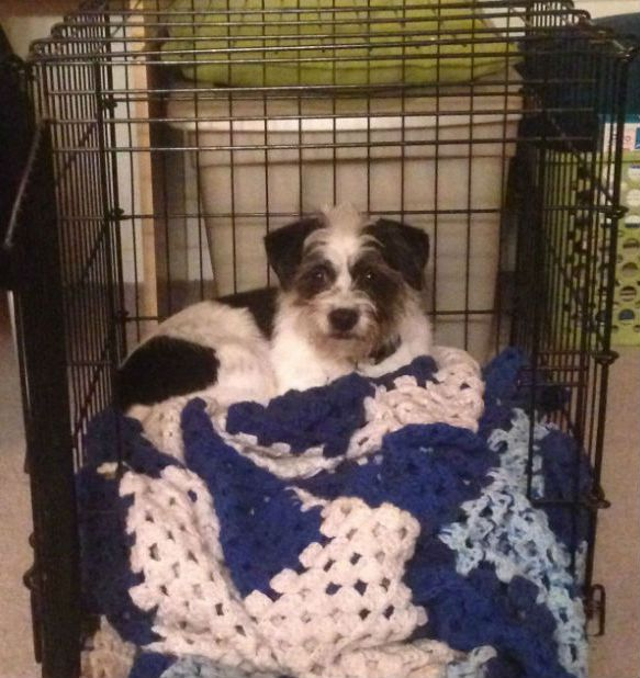 Some dogs love being in a comfy crate! Photo by Abbie Mood