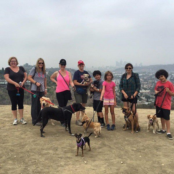 Just a few of my dog friends and our Sat. morning hiking group.