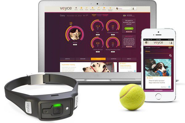 Gather valuable information on your dog's health and activities with the Voyce health monitor.