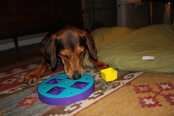 Coop is such a smart boy. (Photo by Lisa Seger)