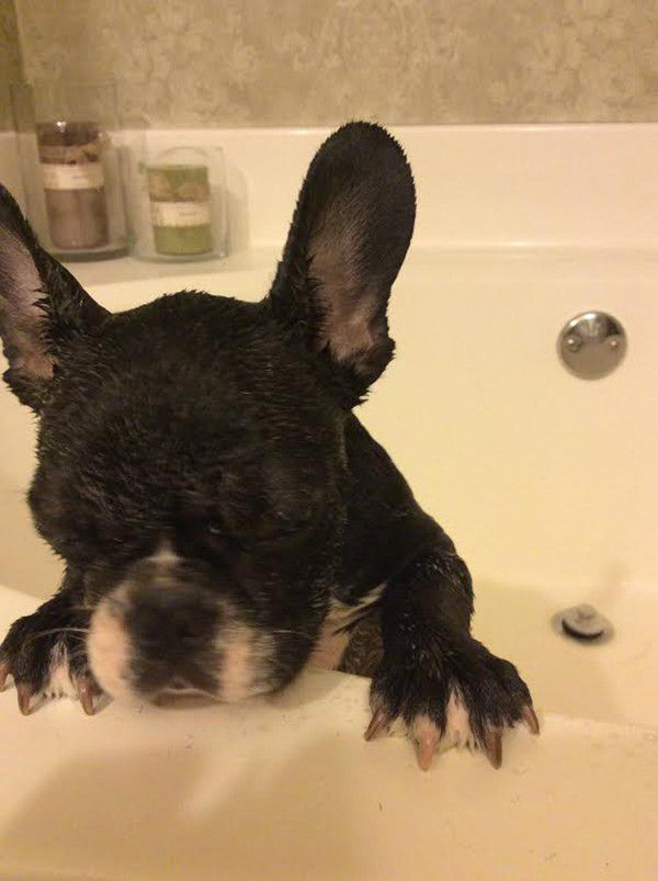 In the early days, I'm sure he'd rather stink than get a bath.