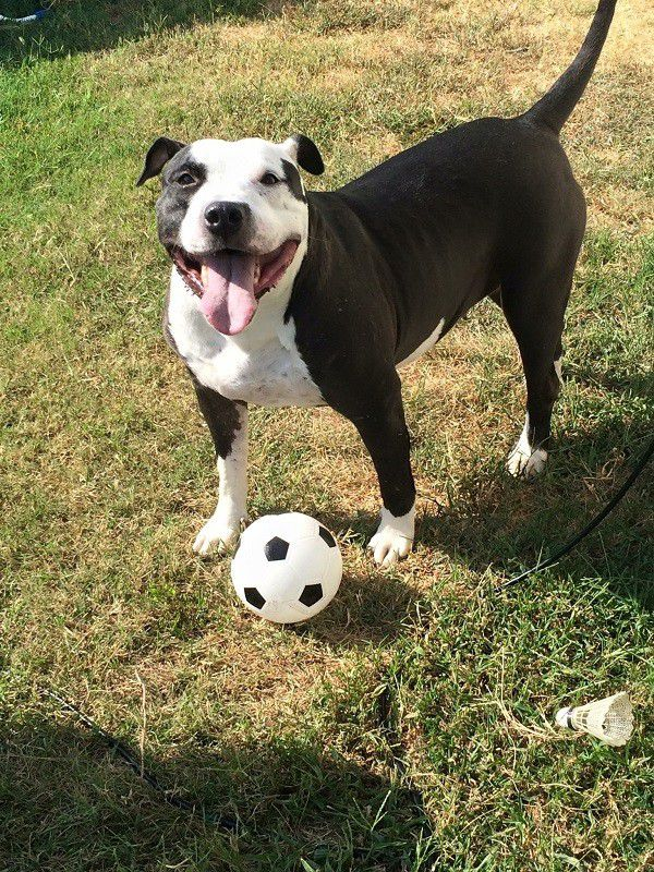 Emily overcame several medical issues and is a playful dog. Photo by: Debbie Allen