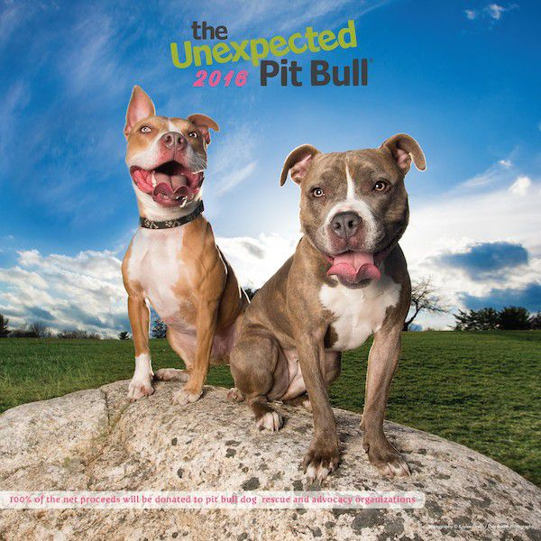 The 2016 Unexpected Pit Bull Calendar.