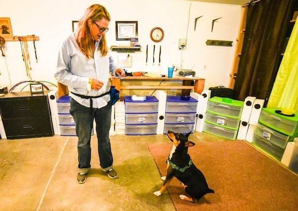 Trainer Annie Phenix getting Toby ready for a nose work session. (Photo courtesy Tica Clarke Photography)