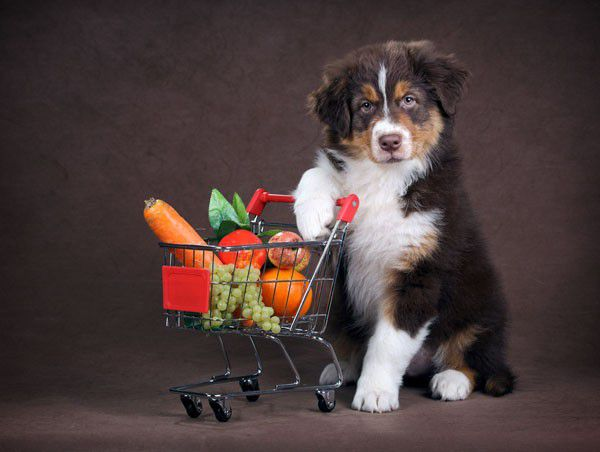 Dog with shopping cart by Shutterstock