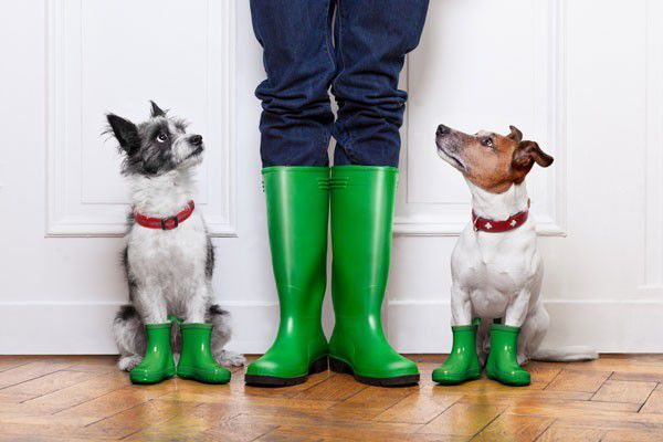 Dogs and person in wellies by Shutterstock