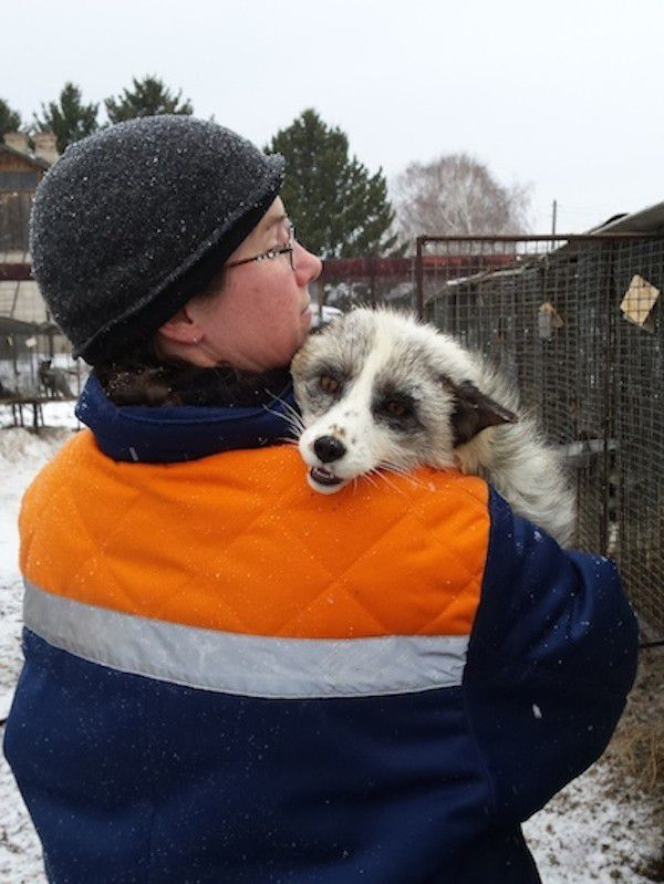Dr. Hekman with a platinum-colored fox in Siberia. (Photo courtesy of Dr. Jessica Hekman)