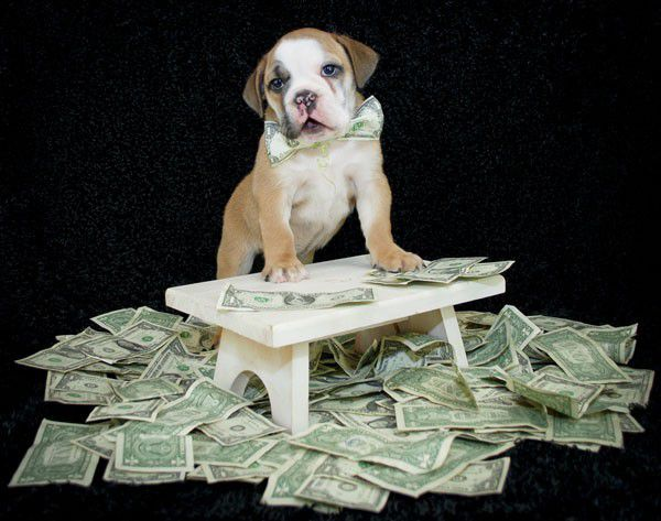 Puppy surrounded by money by Shutterstock