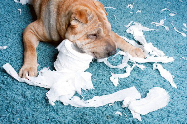 why do dogs eat tampons
