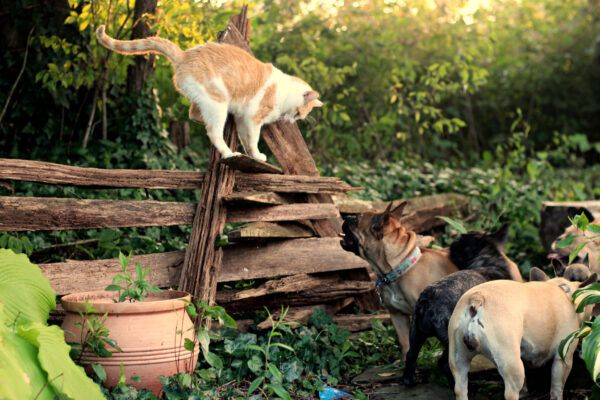 31 cats and dogs