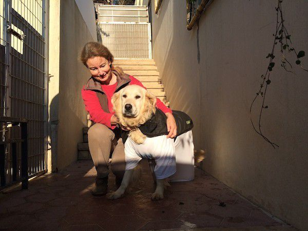 A Golden Retriever named Mariah at the beginning of her journey from Instanbul to the U.S. (Photo courtesy Adopt a Golden)