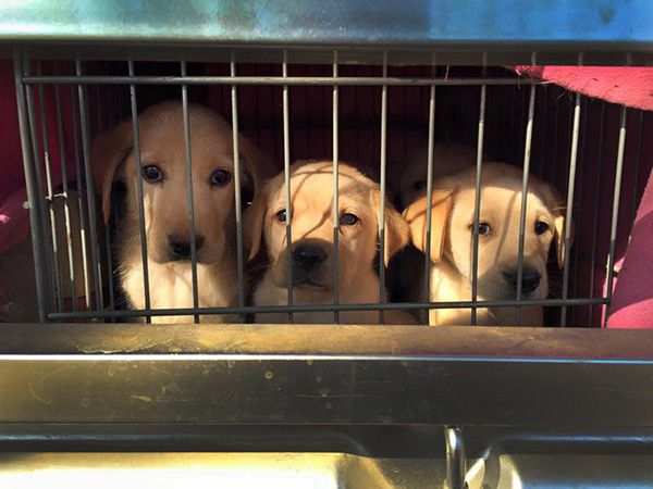 These puppies were rescued from a slaughterhouse in China. It is unthinkable that anyone would want to harm such innocent beings. Photo courtesy of Marc Ching.