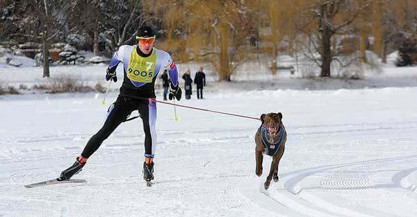 Mike Christman and his dog, Ridge, at the City of Lakes skijoring Loppet.