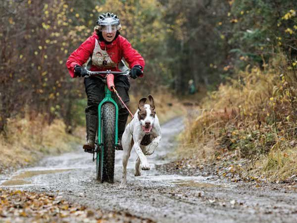 No snow? Try bikejoring. Check out the bikejoring action captured in this shot at the speedy Glass Dog Derby. (Photo by Britt Coon)
