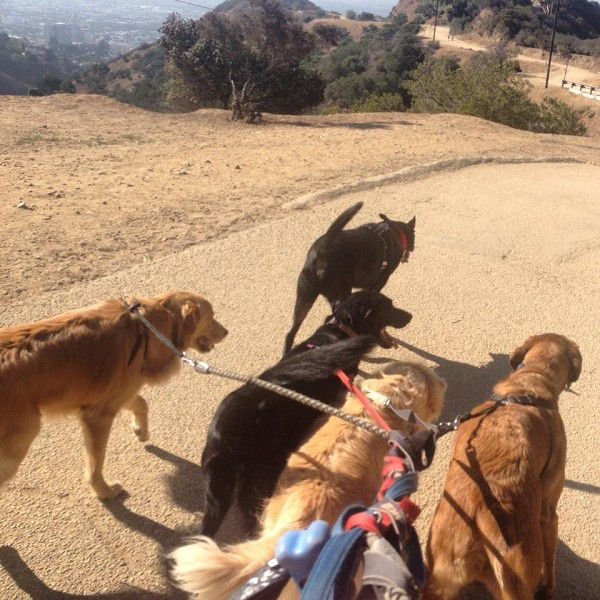 Walking a few clients with my dog, Riggins, leading the way (all pictures by Wendy Newell)