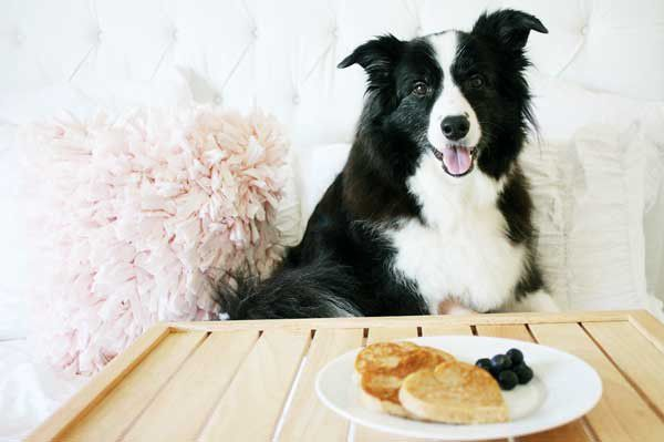 Dog with pancakes.