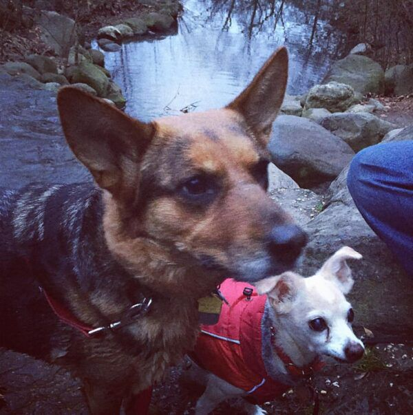 Charlotte, a reactive dog, goes for a hike with another dog.