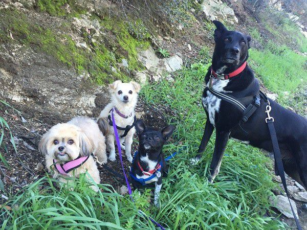 """Riggins with his """"little"""" friends, Chloe, Dot, and Louie. (Photo by Wendy Newell)"""