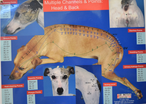 Acupuncture-for-dogs