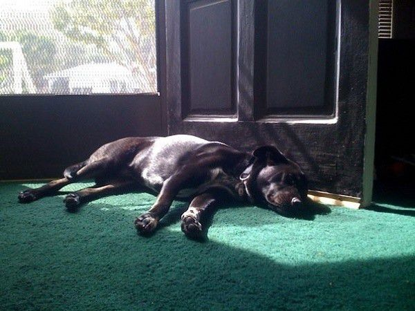 Sun for sun bathing, the door for some neighborhood barking and within eye distance of mom. Perfect! (Photo by Wendy Newell)