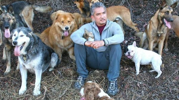 Cesar Millan. (Photo courtesy National Geographic Channel)