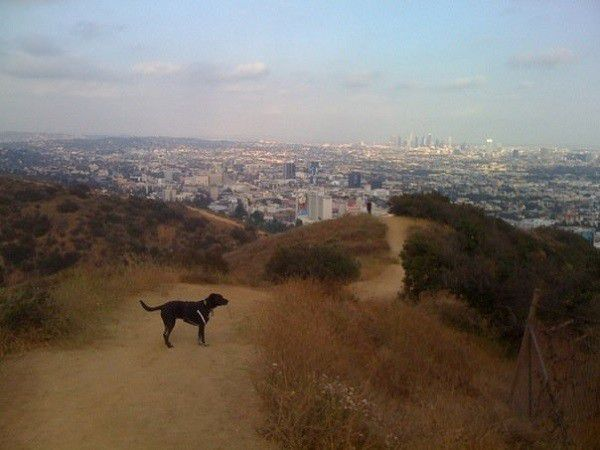 Riggins looks over Hollywood at Runyon (Photo by Wendy Newell)