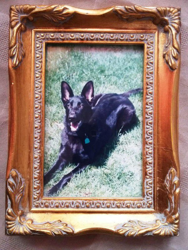 By Kat Merrill This is one of my favorite pictures of Pasha, who died when she was 9 1/2 years old.