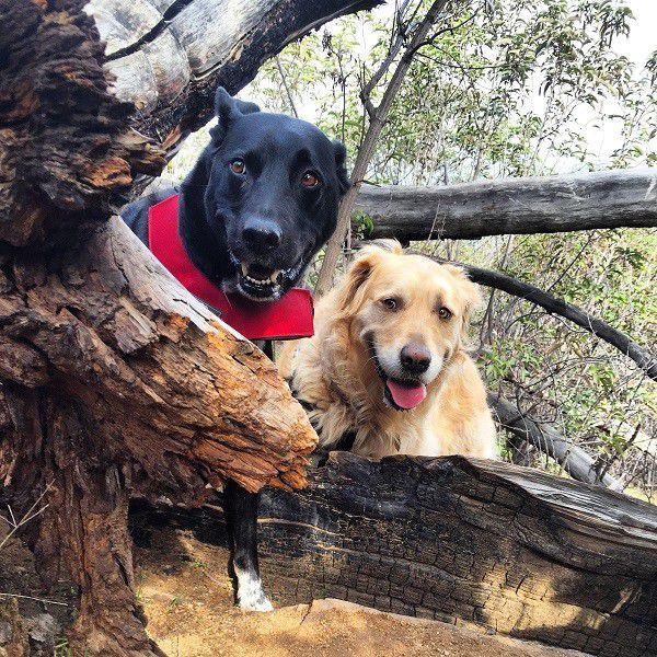 Riggins and his friend Asscher during a recent hike. (Photo by Wendy Newell)