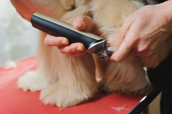 Dog being groomed by Shutterstock.