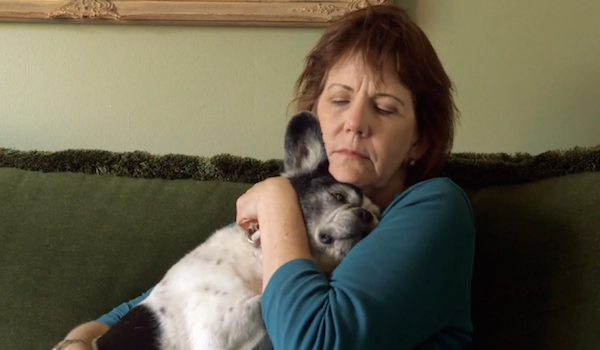 Simon at home with his owner. (Screengrab)