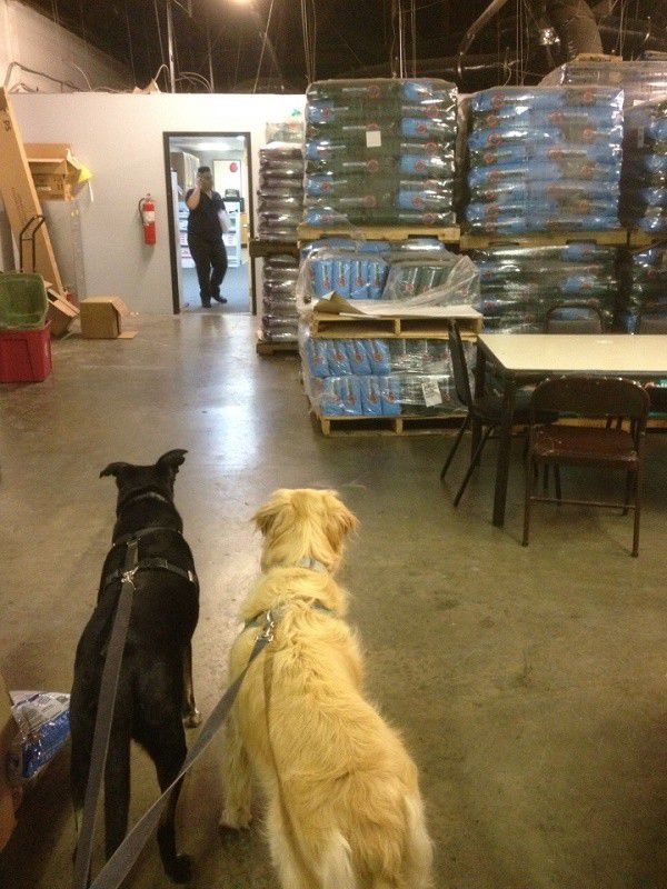 Riggins and his friend Asscher stare longingly at the stacks and stacks of kibble. (Photo by Wendy Newell)