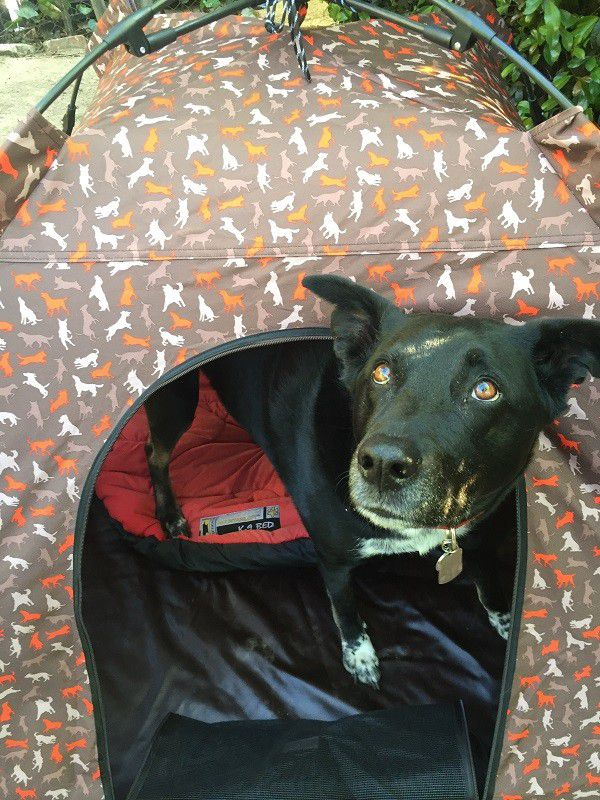 My sweet Riggins in the Dog Tent. Ready for adventure!