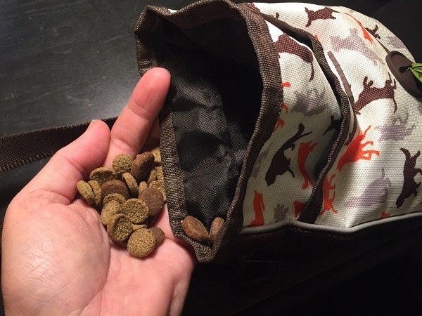 Don't tell Riggins the training pouch is just full of kibble. (PHoto by Wendy Newell)