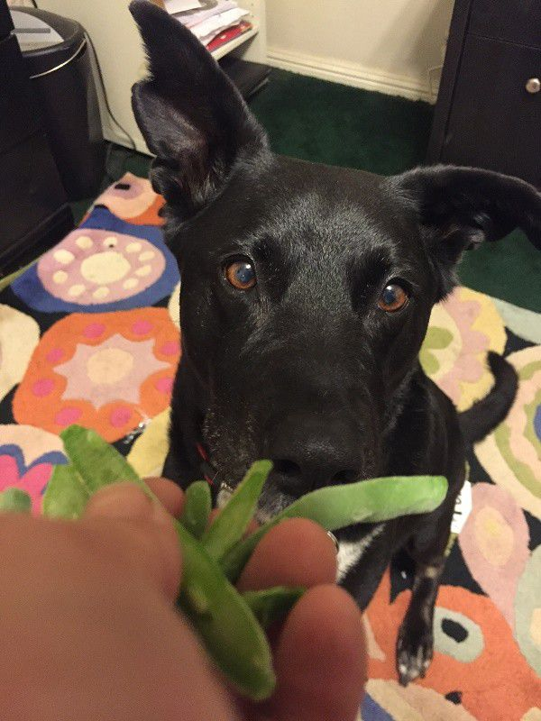 Frozen green beans are delicious! (Photo by Wendy Newell)