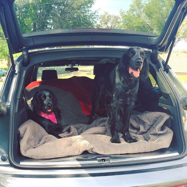 Sissy relaxes in the car with her brother Happy, ready for their long drive far away from her man. (Photo by Kate Bosworth)