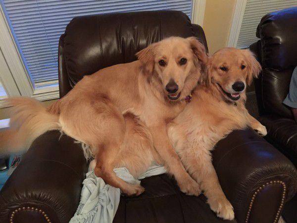 Zoey and Riley love each other. (Photo courtesy Monica Janning)