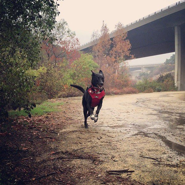 Running free is best done in the rain! (Photo by Wendy Newell)