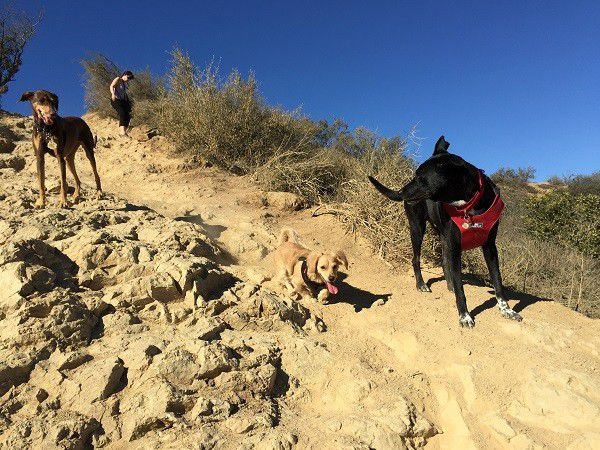 Riggins turns to make sure his doggie friends Shadow and Sadie along with Sadie's human aunt are getting down the hill ok. (Photo by Wendy Newell)
