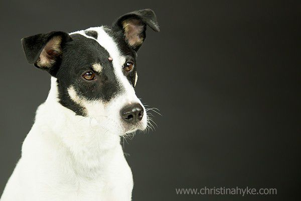 Bert is a sweet, intelligent and uber-friendly 5-year-old terrier mix who is seeking a loving family that will be committed to him for life. Calm, quiet and affectionate, he doesn't understand why he's been at the shelter for so long – after all, he's a catch! Won't you make this handsome little guy your new partner in crime? Adopt him today at the Humane Society of Jefferson County in Wisconsin. (Photo courtesy Christina Hyke)