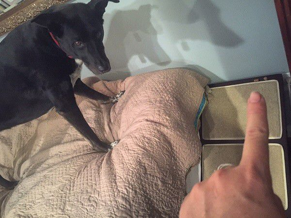 """""""Nope!"""" Riggins response to coming down off the bed using the ramp. (Photo by Wendy Newell)"""