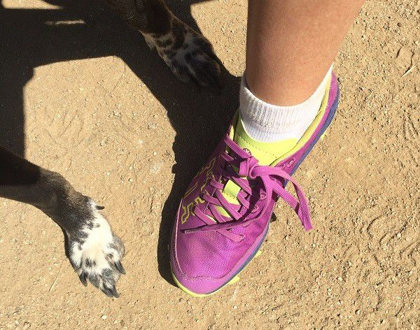 Cute Riggins' paws and Icebug Trail Runners. (photo by Wendy Newell)