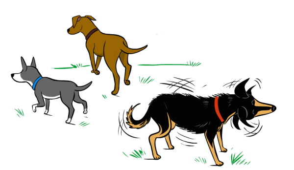 Dogs shake off to release stress. (Illustration by Lili Chin)