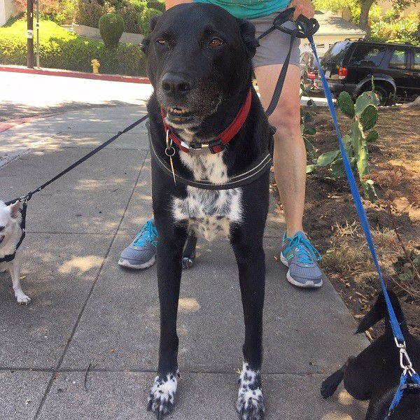 My darling Riggins on his way home with our upstairs neighbors. (Photo by Wendy Newell)
