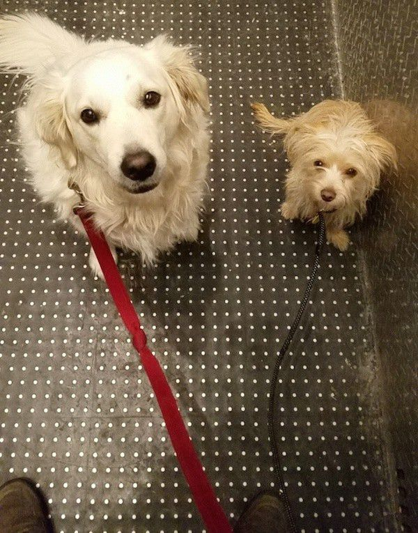Position your dogs at the back of the elevator. (Photo by Logan )