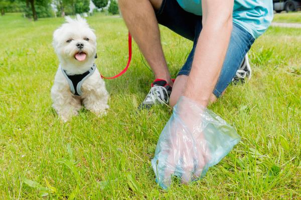 Man picking up dog poop.