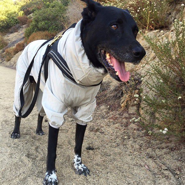 Riggins takes a break on the trail with his Sun & Bug Blocker on. (Photo by Wendy Newell)